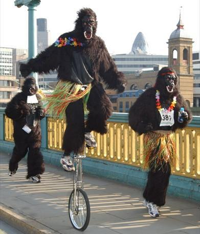 internacionalna_gorila