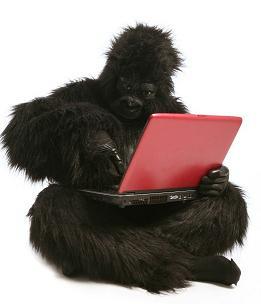 gorila_laptop_2