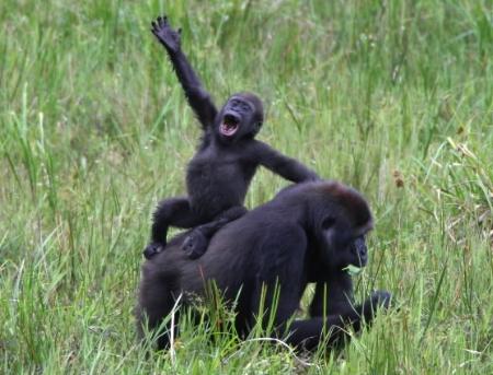 Funny Monkey Jokes